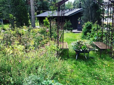Autumn in the woodland garden