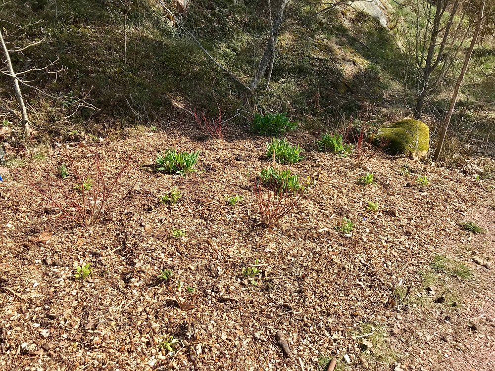 Flower bed mulched with wood chip