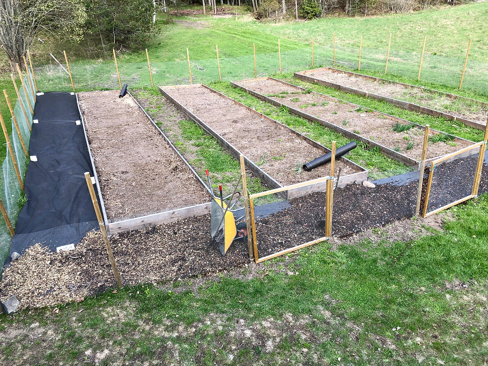 The kitchen garden in the beginning of may