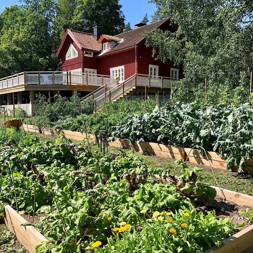 Stensund and the kitchen garden