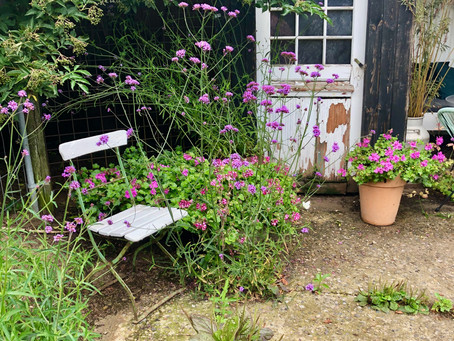 Mrs Pedersens Garden