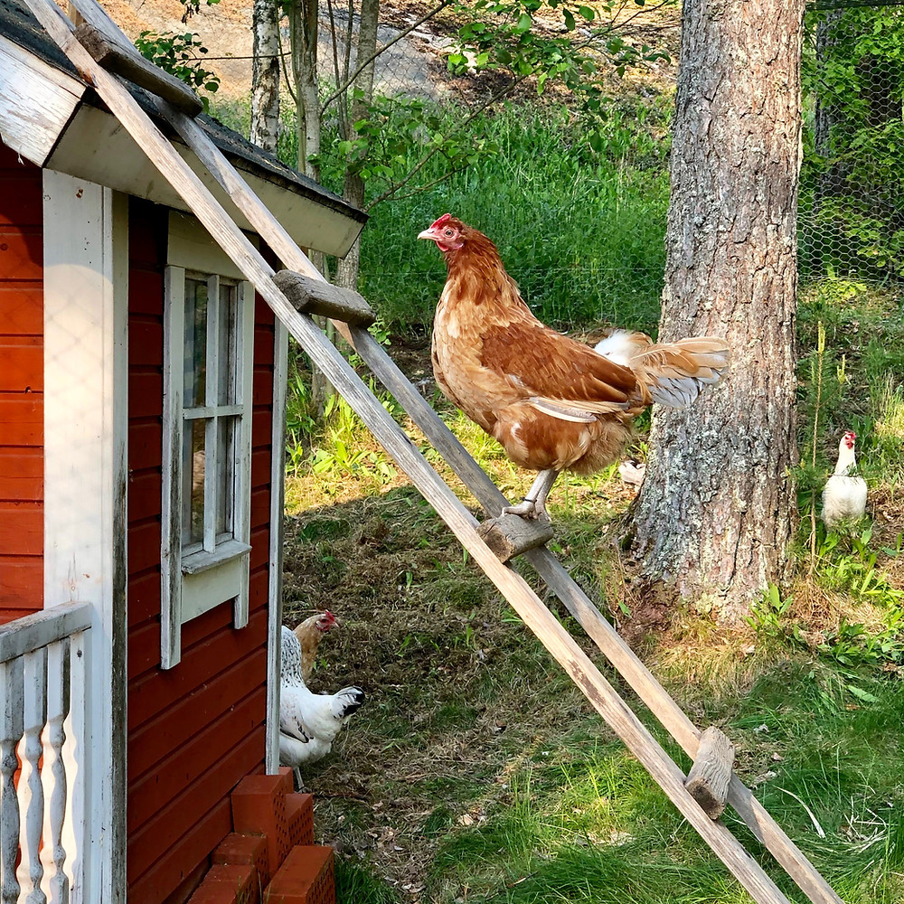 Bertha climbing the ladder of success