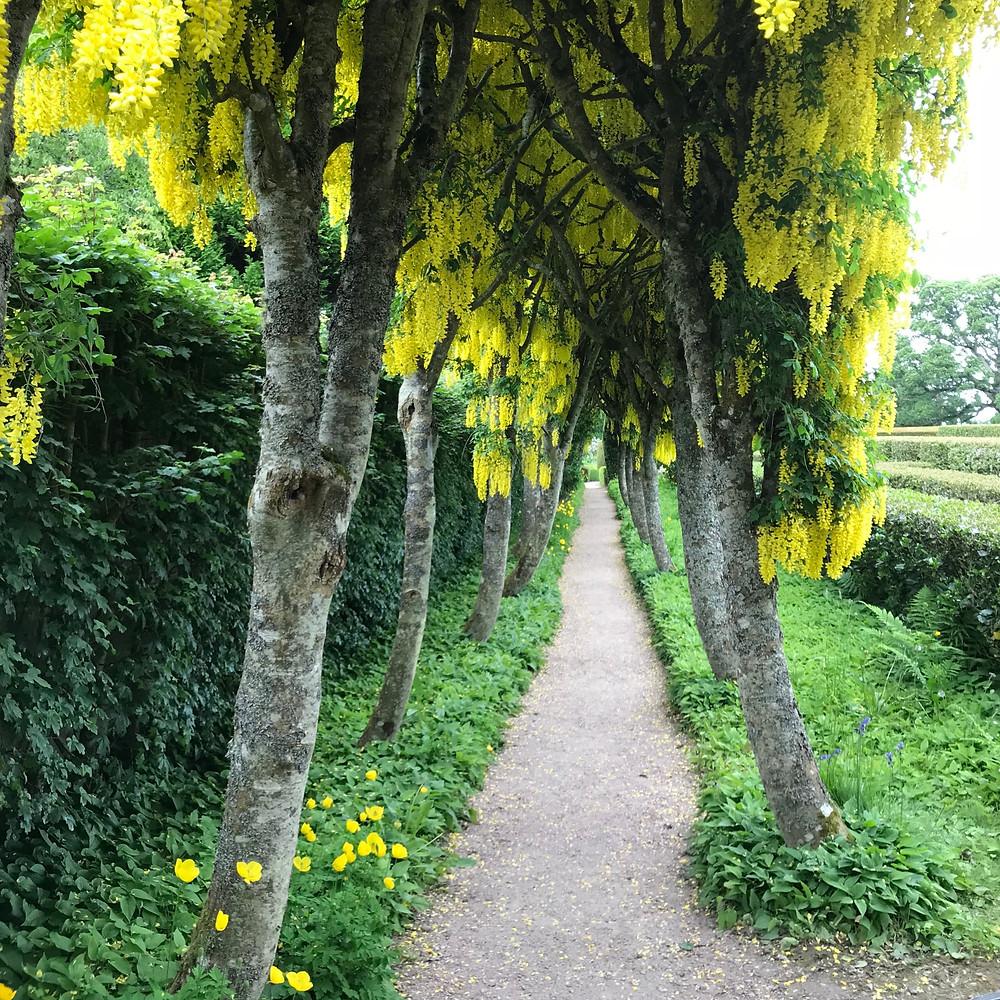 The Viburnum path