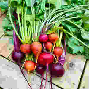 Small beetroots