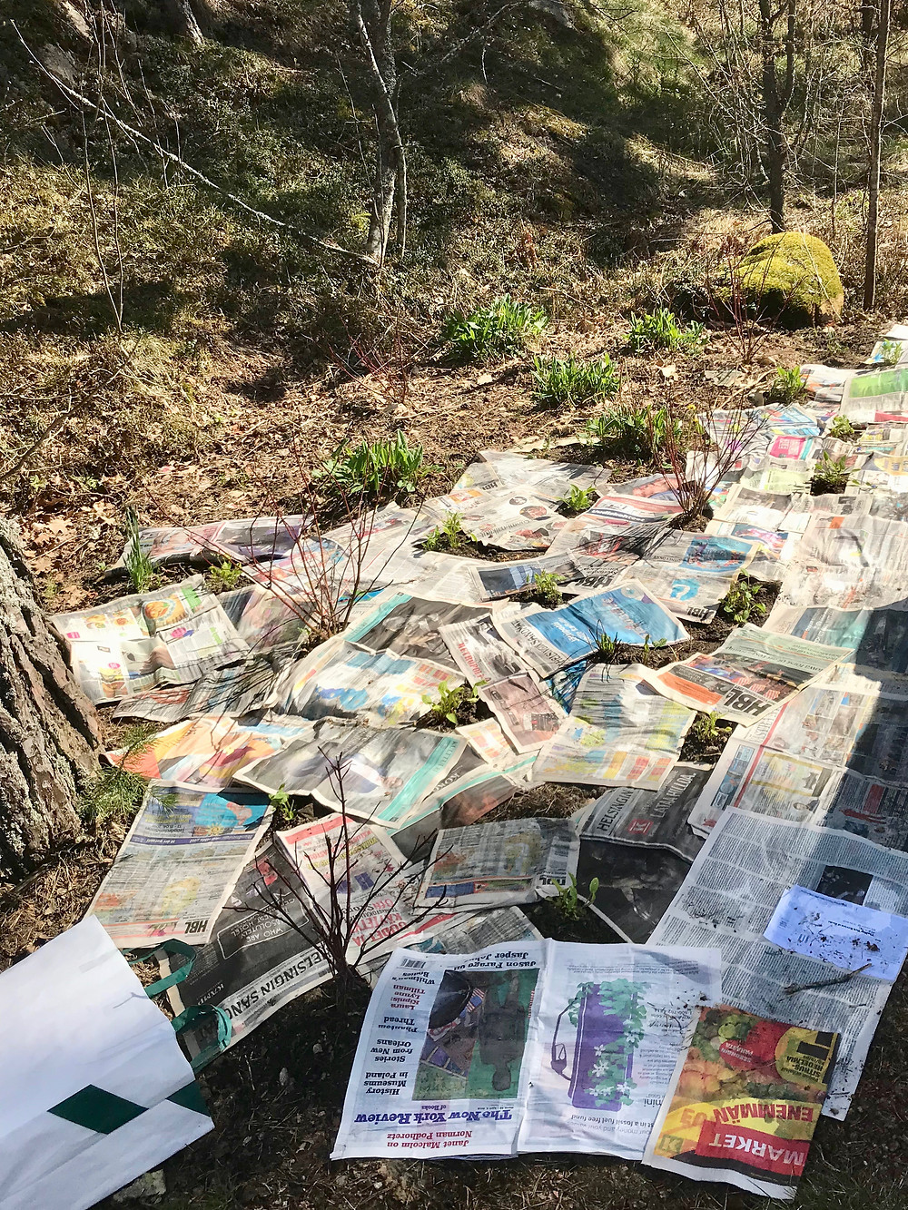 Newspapers laid around flowers and shrubs