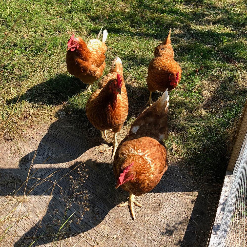 Bertha, Agda, Gwendolyn and Hulda