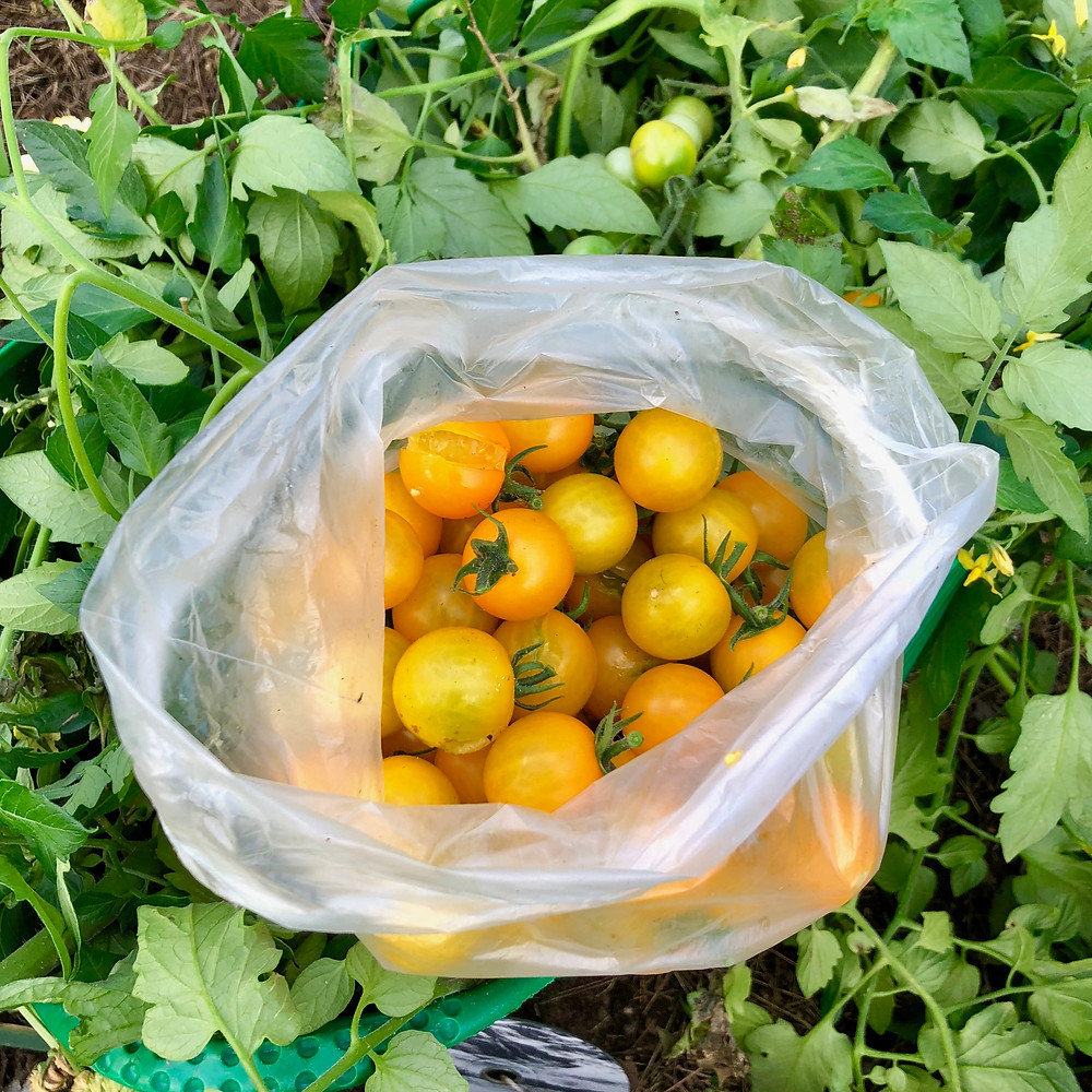 Tomatoes in a bag