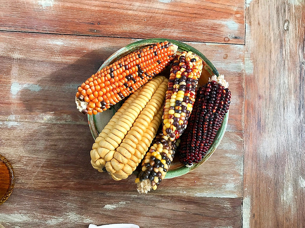 Different kinds of corn