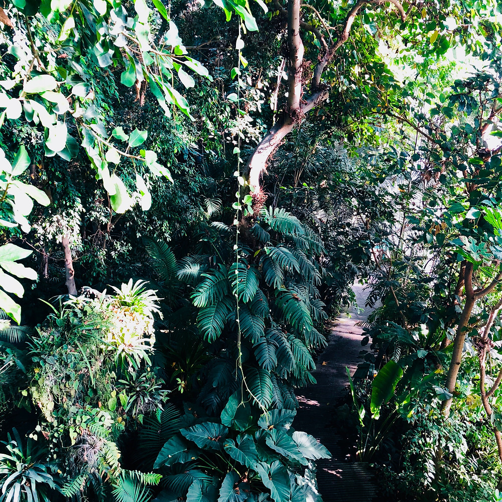 The tropical forest greenhouse
