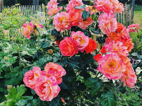 Late summer blooms