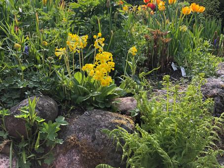 Lillevis spring garden