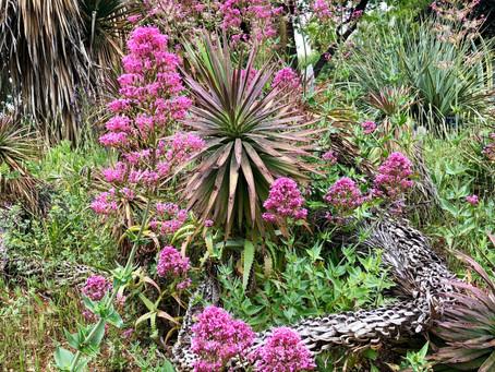 Nice botanical garden