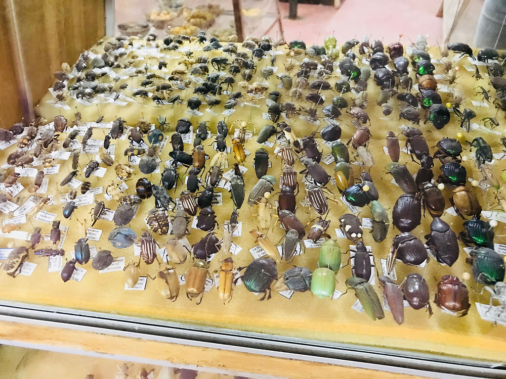 A small sample of the native insect collection