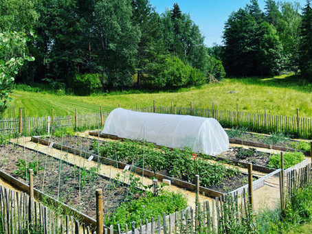 Beginning of the vegetable season