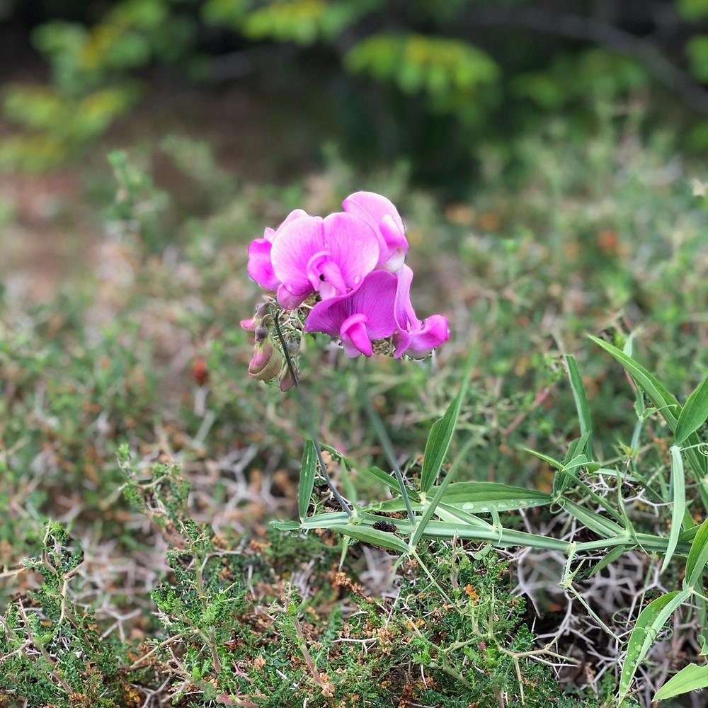 Wildflowers growing freely