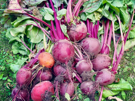 Brilliant beetroots