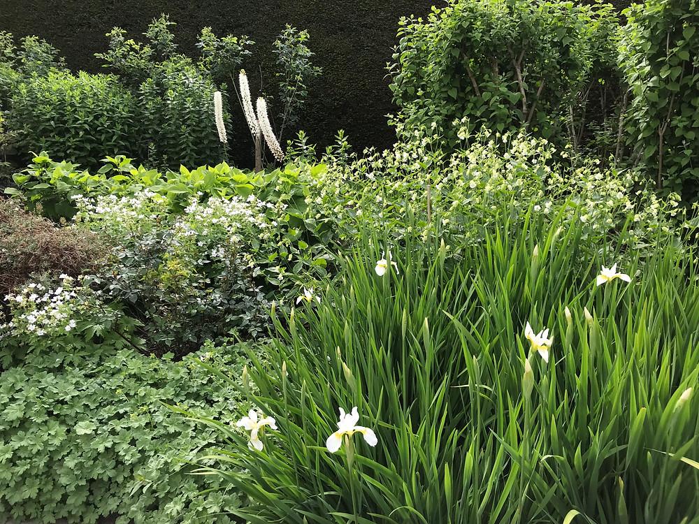 White on white in the Paradise Garden