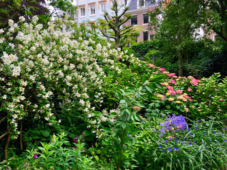 Why city gardens are ecologically important