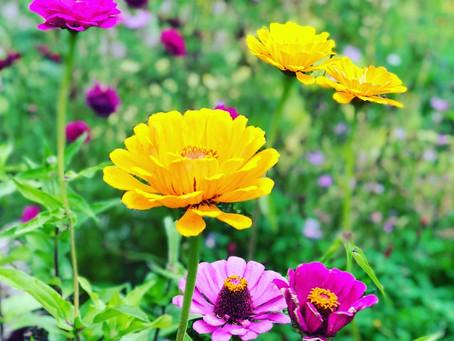 Five reasons I chose organic gardening