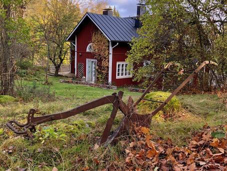 Late autumn garden