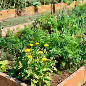 Carrots, onions and marigold
