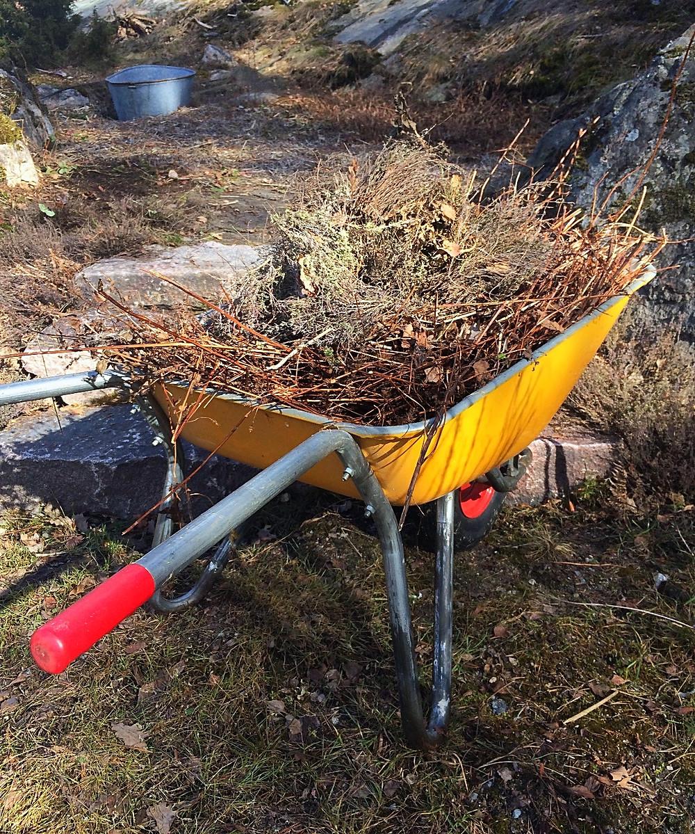 Wheelbarrow with last years deadwood