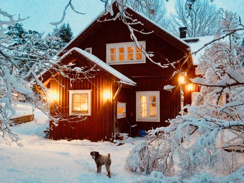 Stensund and Boomer in winter