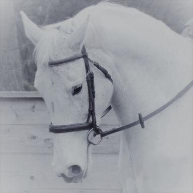 White horse head represening HorseChatHour
