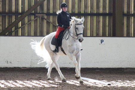Five Days At Talland School of Equitation