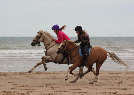 Seaside Ponies!
