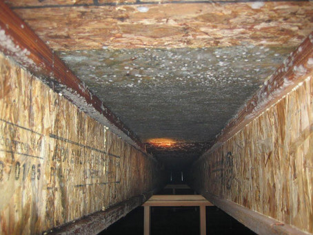 Mold in Crawl Spaces