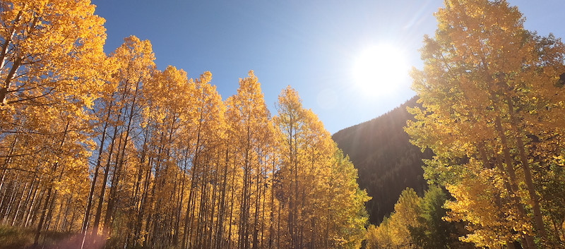 Colorado Aspen.jpeg