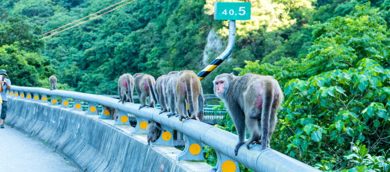 Taiwan Monkeys.jpeg