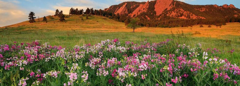 Boulder Flowers.jpg