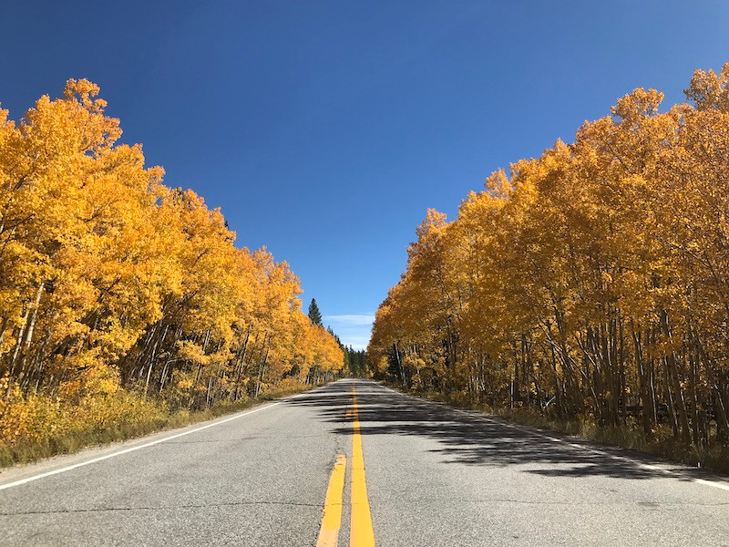 Colorado Aspen.jpeg