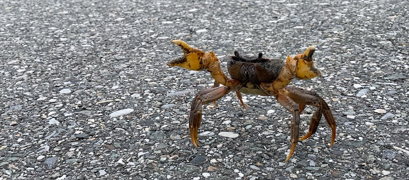 Taiwan Crab Road Cycling.png