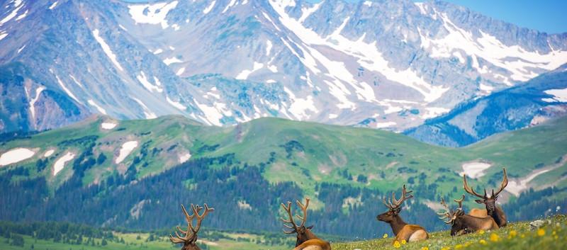 Elk Rocky Mountain National Colorado.jpe