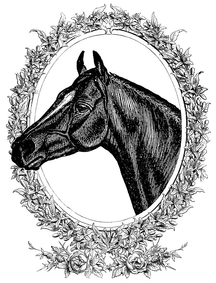 TERRESS Horse_Frame.png
