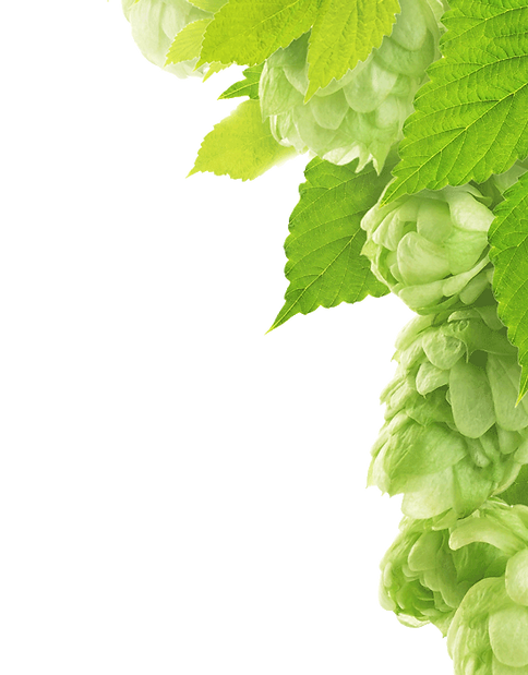 Hops-Brewery-Fresh.png