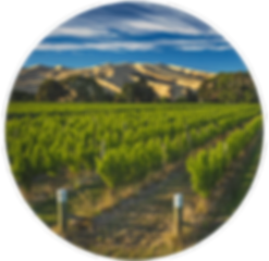 Hello-Sailor-Bountiful-Harvest-vineyard-