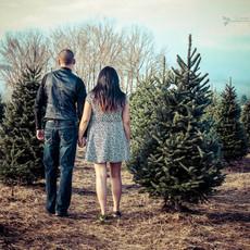 Tree pickin time!