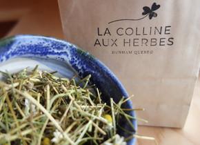 La Colline aux Bleuets c'est aussi un jardin d'herbes médicinales. www.collineauxherbes.com