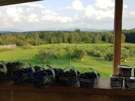 Bleuets et herboristerie. Kiosque ouvert de 9h à 16h le 11 août