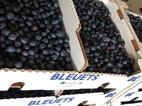 Dimanche 28 juillet : des bons bleuets bio à cueillir de 9h à 14h