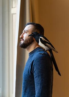 Belvárosi szarkanevelde | The magpie rescuer