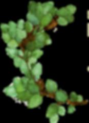 leveles ag_zoldebb_2 (2).png