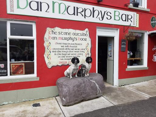 Dan Murphys Bar