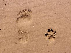 footprint-261337_1920.jpg