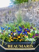 beaumaris flowers.jpg
