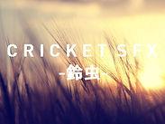 CRICKET SFX -鈴虫- 鈴虫鳴き声素材集